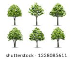 collection of realistic tree... | Shutterstock .eps vector #1228085611