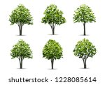 collection of realistic tree... | Shutterstock .eps vector #1228085614