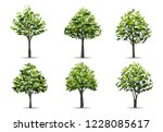 collection of realistic tree... | Shutterstock .eps vector #1228085617