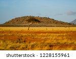 solitary tree landscape in...   Shutterstock . vector #1228155961