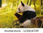 Big Panda Sitting On The Fores...