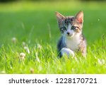 Stock photo little striped kitten hiding in the grass 1228170721