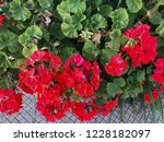 close up on a bush of red... | Shutterstock . vector #1228182097