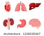 human anatomy. a set of... | Shutterstock .eps vector #1228230367