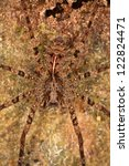 a spider skilfully camouflaged. ...   Shutterstock . vector #122824471