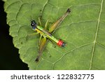 orthoptera striking in its...   Shutterstock . vector #122832775