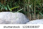 deep green bamboo leaves and... | Shutterstock . vector #1228338307