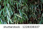 beautiful dark green bamboo... | Shutterstock . vector #1228338337
