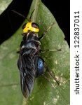 this exotic fly. fauna of rain...   Shutterstock . vector #122837011
