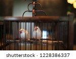 bird in cage | Shutterstock . vector #1228386337