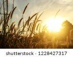 flower grass waver in the wind...   Shutterstock . vector #1228427317