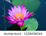 lotus solitary in the pond   Shutterstock . vector #1228438264