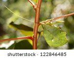 grasshoppers are sometimes very ...   Shutterstock . vector #122846485