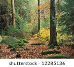 Forest Trail In Autumn  Hockin...