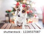 dog near christmas tree | Shutterstock . vector #1228537087