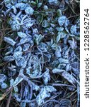 frost on the grass. | Shutterstock . vector #1228562764