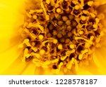 pollen on a yellow flower as a... | Shutterstock . vector #1228578187