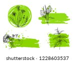 template card with medicinal... | Shutterstock .eps vector #1228603537