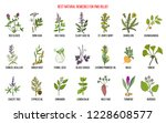herbal remedies for pms... | Shutterstock .eps vector #1228608577