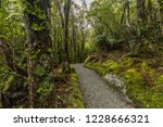 hiking to the franz josef... | Shutterstock . vector #1228666321