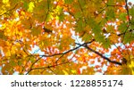 view from under tree with... | Shutterstock . vector #1228855174