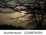 a sunset through branches in a... | Shutterstock . vector #1228876354
