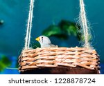 finch with an orange beak sits... | Shutterstock . vector #1228878724