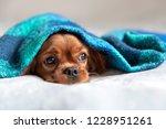 cute dog sleepeing under the...   Shutterstock . vector #1228951261