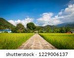 the walk way by bamboo bridge... | Shutterstock . vector #1229006137