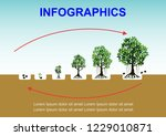 planting tree process... | Shutterstock .eps vector #1229010871