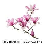 Pink Magnolia Flower Spring...