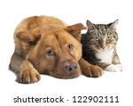 Stock photo dog and cat together on white background wide angle picture 122902111