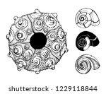 sea shells and sea urchin shell ... | Shutterstock .eps vector #1229118844