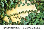 ivy frame  the poison ivy... | Shutterstock . vector #1229195161