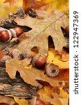 Brown Acorns On Autumn Leaves ...