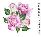 roses illustration on white... | Shutterstock . vector #1229542651