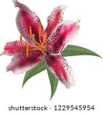 illustration with lily flower... | Shutterstock .eps vector #1229545954