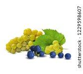 fresh  nutritious  tasty grapes.... | Shutterstock .eps vector #1229598607