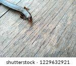 lizard on a wood background.  ... | Shutterstock . vector #1229632921