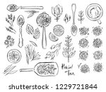 illustrations of herbal and... | Shutterstock .eps vector #1229721844