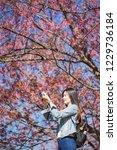 woman take a sakura cheery... | Shutterstock . vector #1229736184