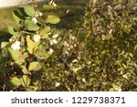 ... | Shutterstock . vector #1229738371