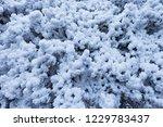 frozen trees in huangshan... | Shutterstock . vector #1229783437