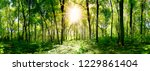 beautiful forest panorama in... | Shutterstock . vector #1229861404