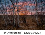 winter sunsets in the north are ... | Shutterstock . vector #1229924224