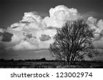 bare trees in the sussex... | Shutterstock . vector #123002974