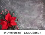 Christmas Flower Poinsettia And ...