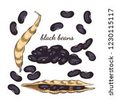 black beans hand drawn sketch... | Shutterstock .eps vector #1230115117