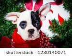 black and white french bulldog... | Shutterstock . vector #1230140071