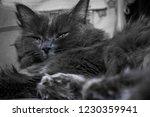 gray fluffy cat lying on the... | Shutterstock . vector #1230359941